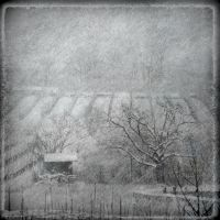 Winter 2 by Amalus