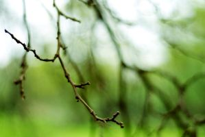 Branches by Rachellehardy