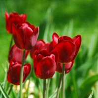 Colours of Spring IX by Wilithin