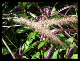 Purple Peppers by Alchemical