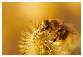 Bee 2 by Zenith1