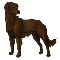 Flat-coated retriever by dalmatianluver