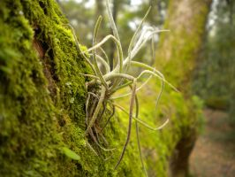 More Moss by MelodiousWriter