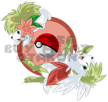 Shaymin and Shaymin sky forme
