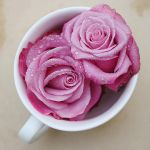 Rose tea II by lieveheersbeestje