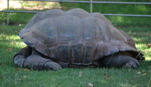 Tortue - Turtle by cendredelune