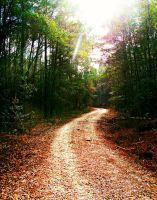 Into the Forest by JNS0316