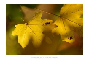 Autumn in Malomvolgy - VIII by DimensionSeven