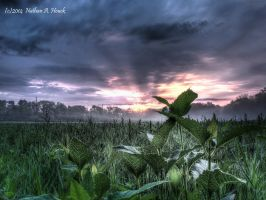 Sunrise over fresh green something by abstractcamera