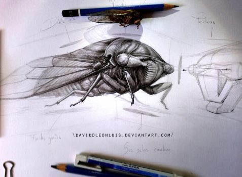 Study about dissected Cicada, and how to apply it by Daviddleonluis