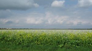 Yellow and White Landscape by RT912