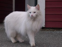 White cat- Ghost by AnTheilo