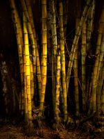 Bamboo Patch by Jacob-Routzahn