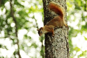 squirrel by Adrienneknott