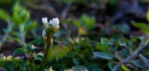Tiny White Flower by NicolaZanarini