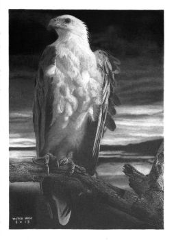 'Freedom!' Graphite Drawing by pesterhugo