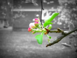 Think Spring - Red Apple Blossoms by AndehDulac