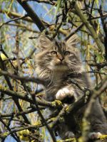 Neighbours kitty 5 by Taniux1994