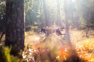 Running free by hannord