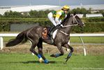 Thoroughbred jumper stock by Valkyrie-Stock