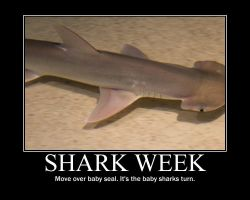 Shark Week - It's a bad week to be a seal by Storm137