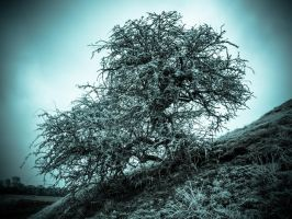 Frosted tree by grbush