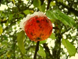 Winter Apple by Nusio21