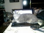 My cat always likes to lay on my computer. Lol by knowhopeinme