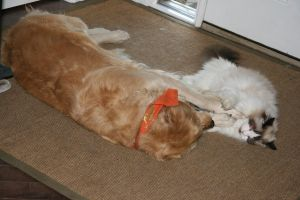 my cat and dog play by mcm1011