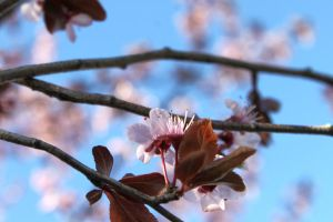 Blue Skies and Blossoms by katseyecreations