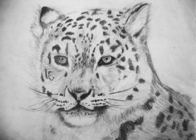 Snow Leopard by Bolbec