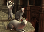daz 3d cats by Cheese602