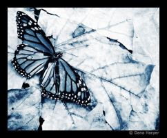 Beautiful Death - blue by chaoticparadox