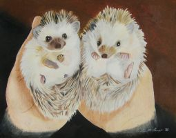 Hedgehogs by WindSong83