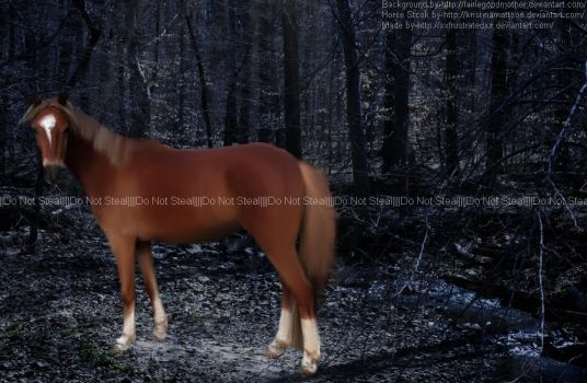 Palomino Horse in the Woods by xxFrustratedxx