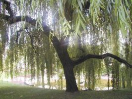 Under The Willow Tree by Alyxandre