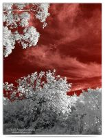 Red Sky - infrared by LightSculpting