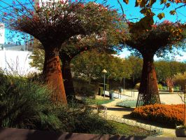 Ornamental Trees by Humble-Novice