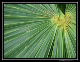 In the Palm by picworth1000wrds