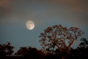 Moonrise in clouds by kayaksailor