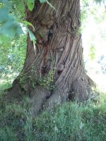 tree 6 by BlissStock
