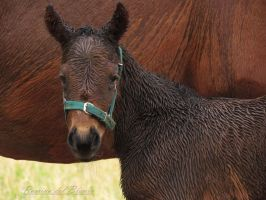 Filly Wet by Romydb