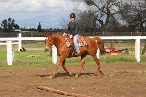 Chestnut Thoroughbred Mare Western Riding by HorseStockPhotos