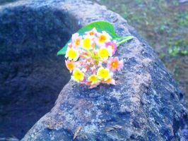 Indian Winter Tiny Flower 5 by SRUJAL