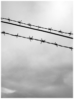 barb wires by geyl