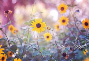 Dancing in the Sun by CandiceSmithPhoto