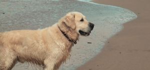 Dog at the beach by city17