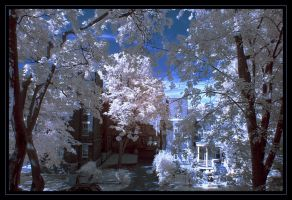 Outremont IR by Dje514