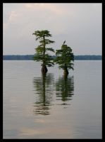 Cypress and Heron by DJCandiDout
