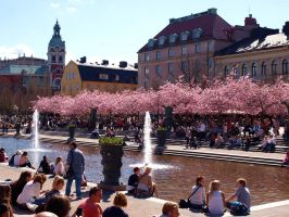 Stockholmers and Sakuras by Luddox